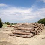 Brennholz / Stammholz